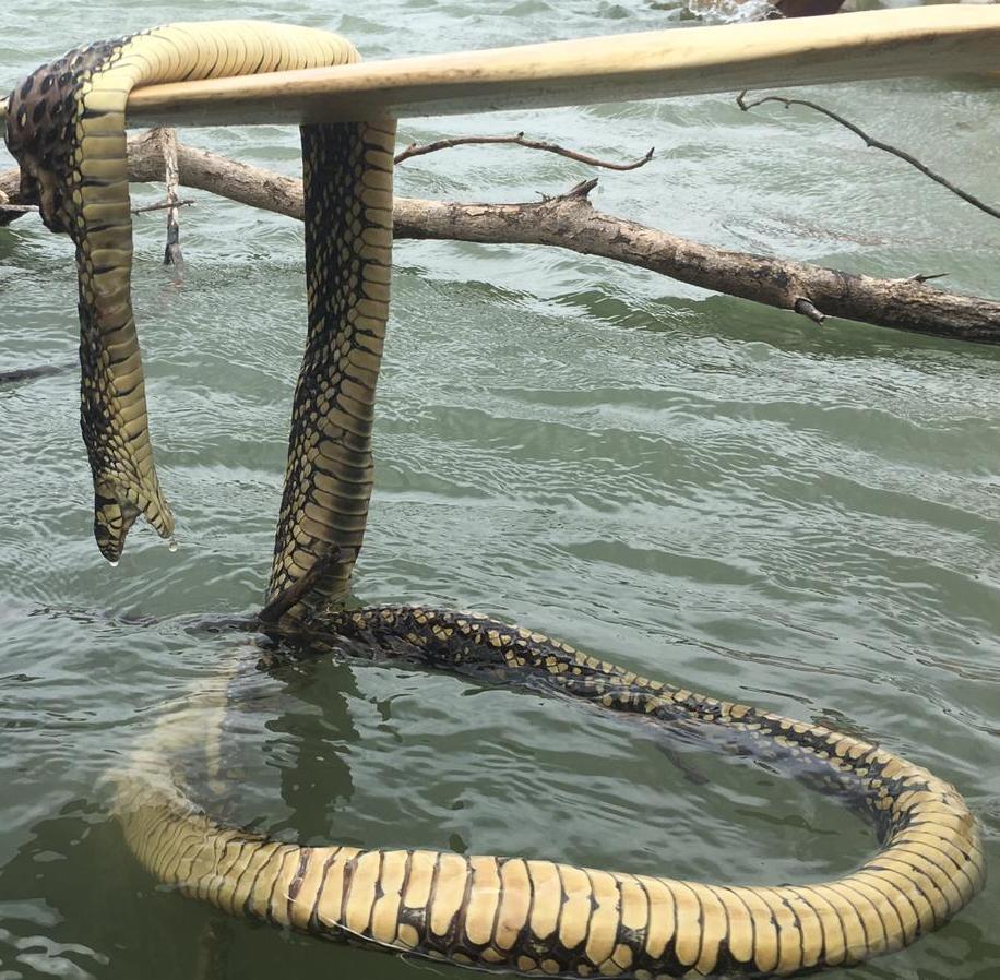 Slangenbeet